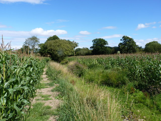 Footpath between maize and a stream