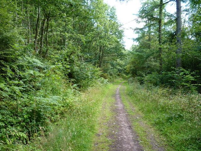 Bridleway in Eastridge Woods