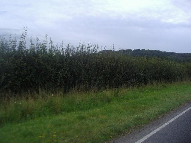 View from Midhurst Road, Fernhurst