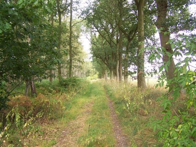 Footpath By Hayes Wood