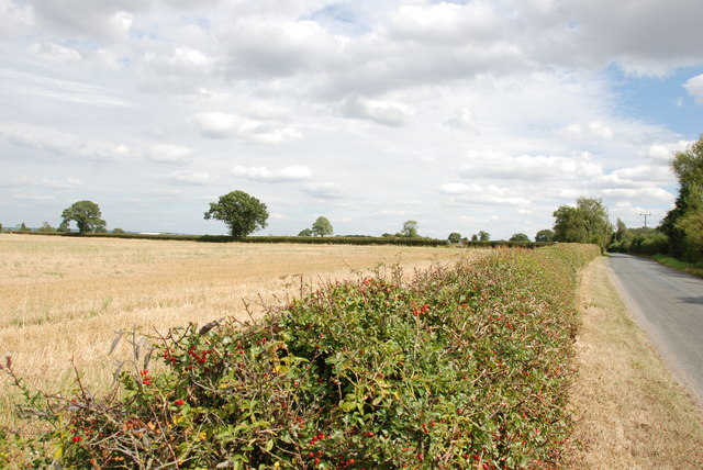 Hedge full of Berries to Harvested Field