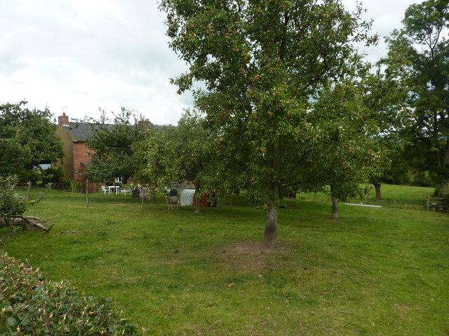 Orchard and sheep at Green House Farm