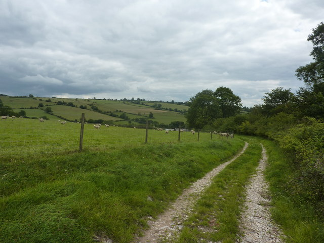 Sheep and track above Petthills Lodge Farm