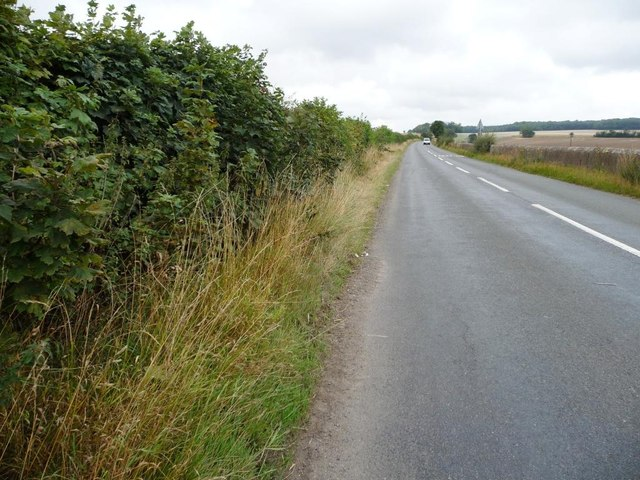 Hedgerow on south side of New Road