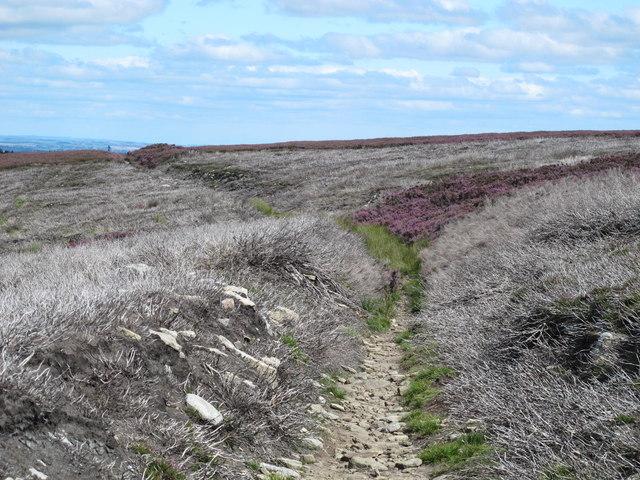 The Carriers' Way on Burntshieldhaugh Fell
