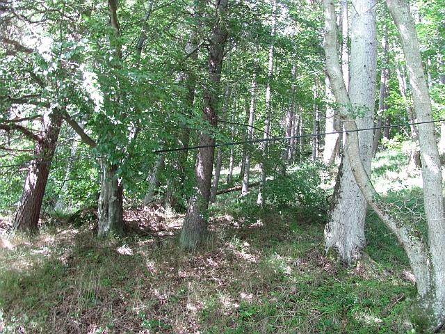 Forest, Drummond Hill