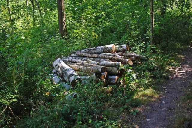 Logs in Trench Wood, near Sale Green