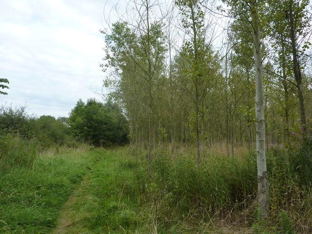 Woodland in Ashbourne