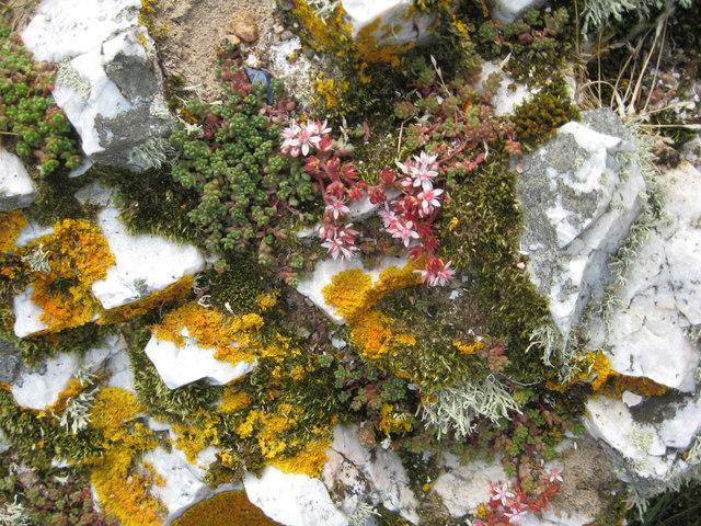 A veritable mini-garden