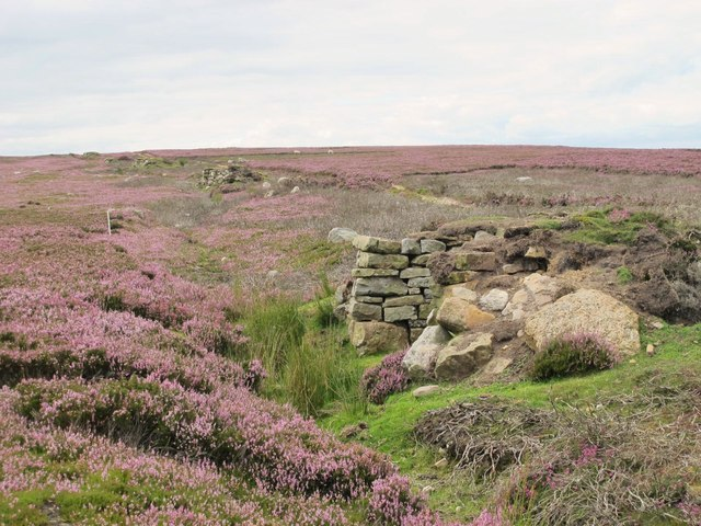 Line of grouse butts on Acton Fell