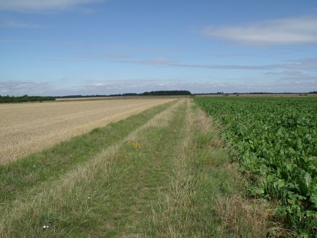 Track from Howell Fen Drove to Hodge Drain