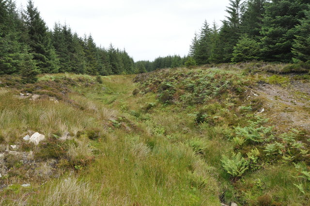 Alltan Bàn, in the forest, Kintyre