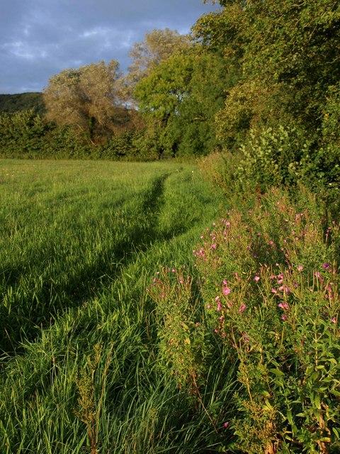 Field edge near Cheddar