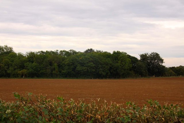 Looking over a field to Ayre's Common Plantation