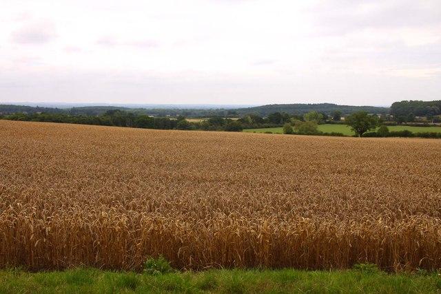 Wheat field near Coleshill
