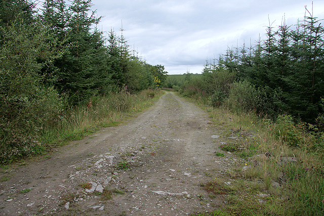 A forestry road