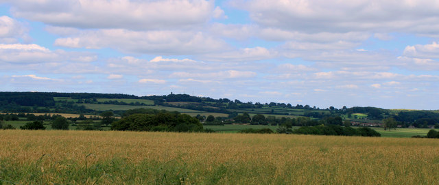 2011 : Wheatfield north of Brottens Road