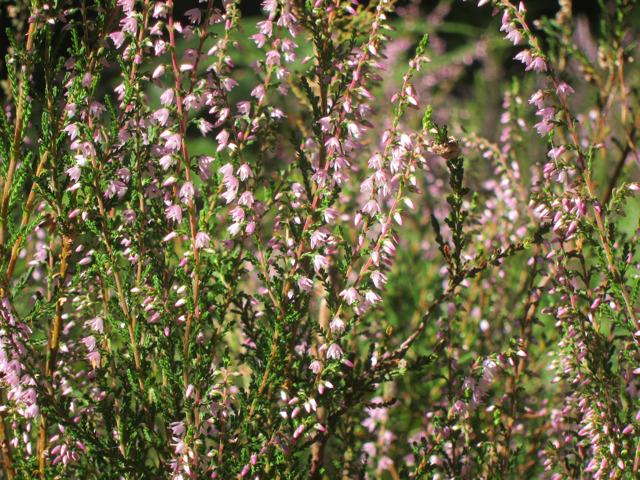 Woodland flowers in Mallydams Wood
