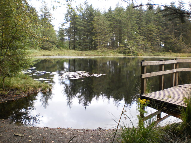 Tree reflections at Grizedale Tarn