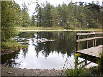 SD3494 : Tree reflections at Grizedale Tarn by Peter S