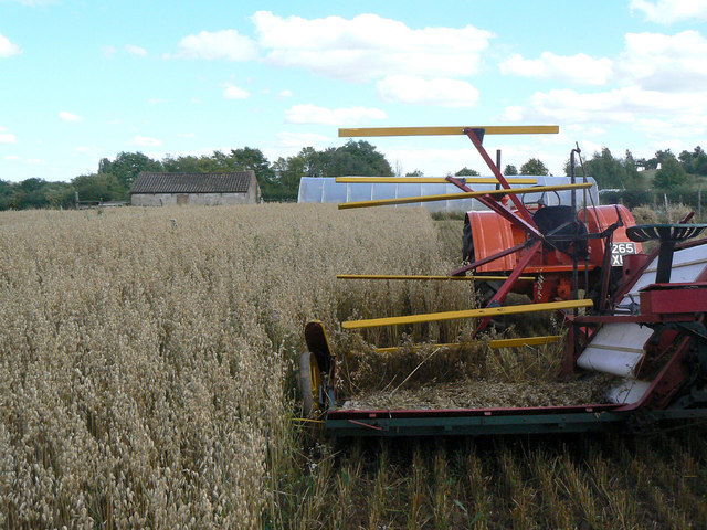 Harvesting with reaper and binder - 3
