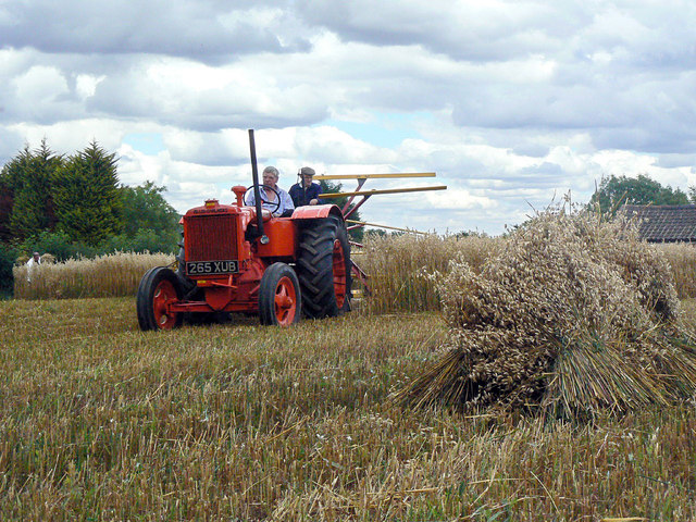 Harvesting with reaper and binder - 6
