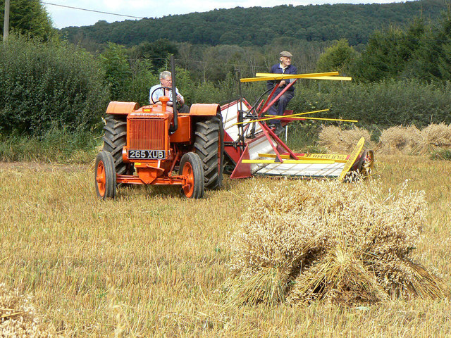 Harvesting with reaper and binder - 10
