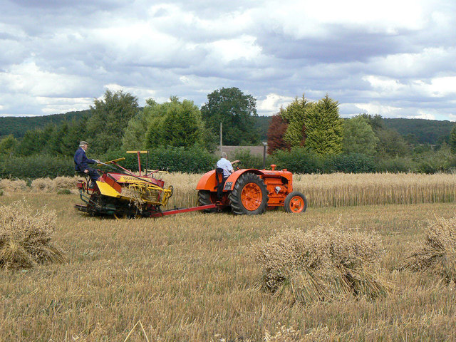 Harvesting with reaper and binder - 11