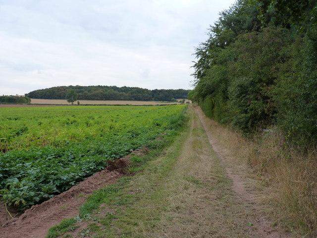 Between potatoes and a copse