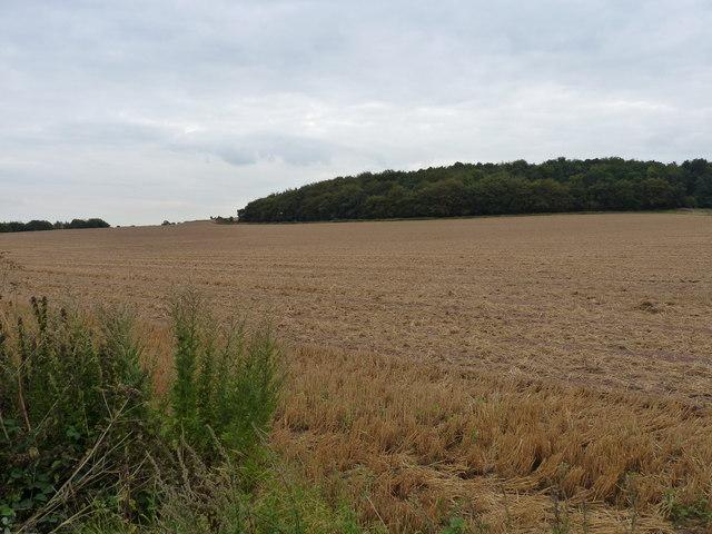 Cropped field near Cannebuff