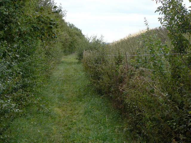 Footpath alongside the clay pit