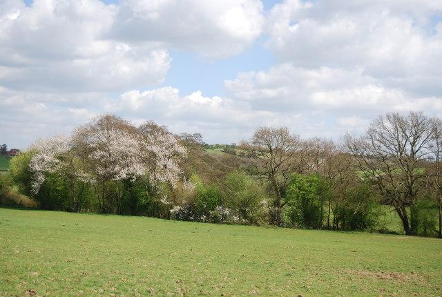 Hedgerow blossom