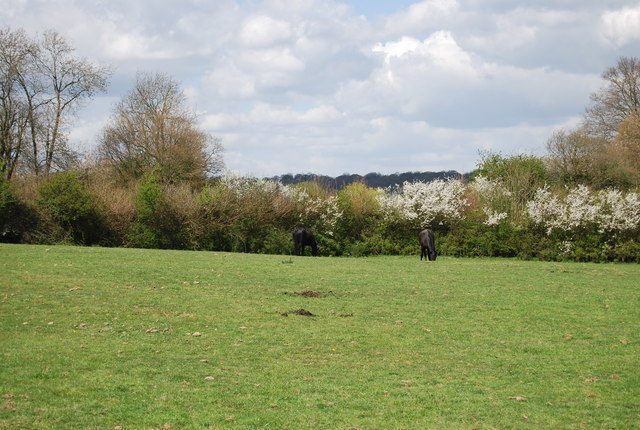 Horse and blossom by the 1066 Country Walk