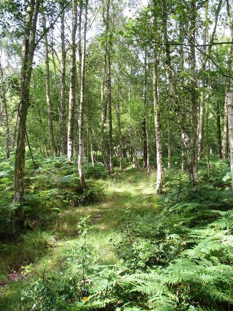 Birch woodland, Thornthwaite