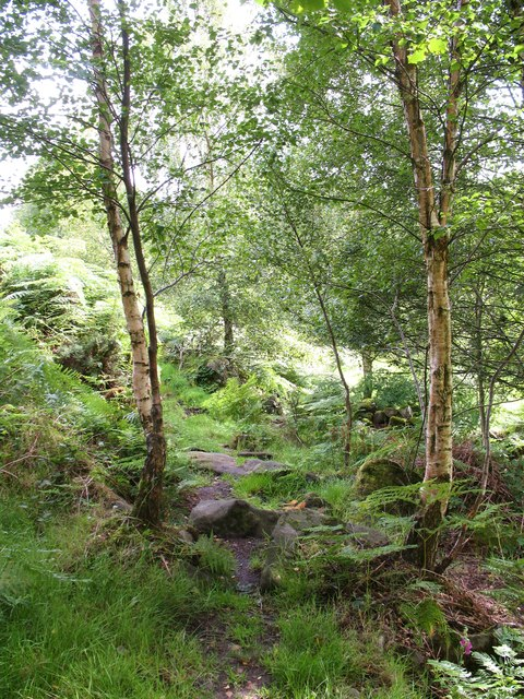 Woodland Path by Padside Beck