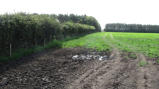 Field and shelter belts