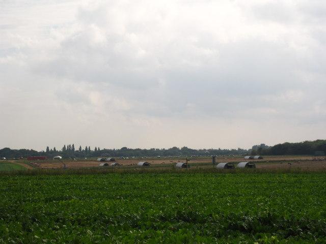 Pig arks on Waldringfield Heath
