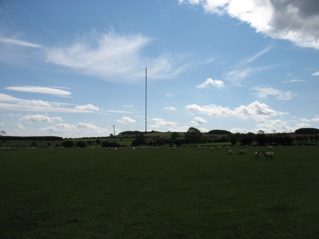 Sheep grazing on top of the Mendip Hills