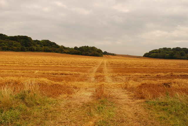 Tractor Tracks at Harvest Time