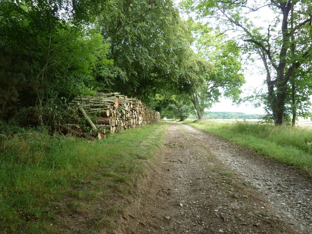 New log piles by Colworth Down