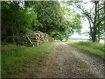 SU8414 : New log piles by Colworth Down by Dave Spicer