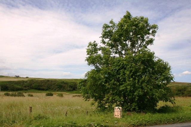 Milestone by the Tree