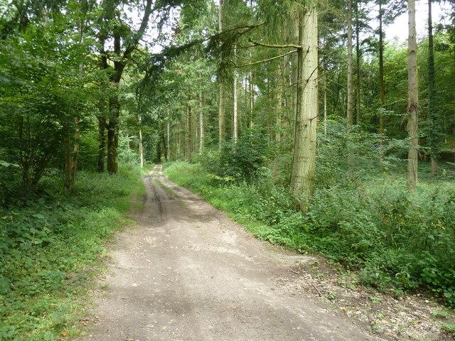 Bridleway 450 NE through Westdean Woods