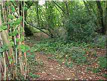 TG1312 : Path in Stonyhole Plantation, Ringland by Evelyn Simak