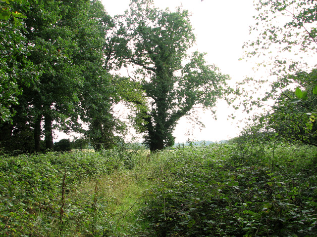 On the southern edge of Stonyhole Plantation, Ringland