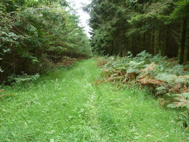 Woodland path in Stubbs Copse