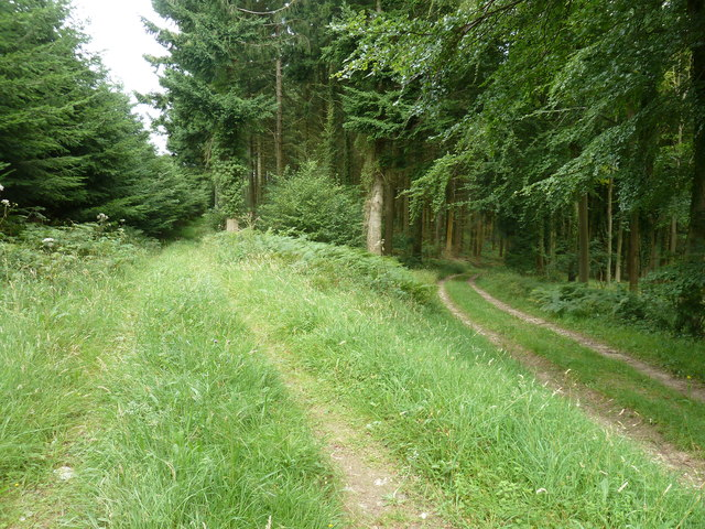Bridleway 450, on the right, descending in Stubbs Copse