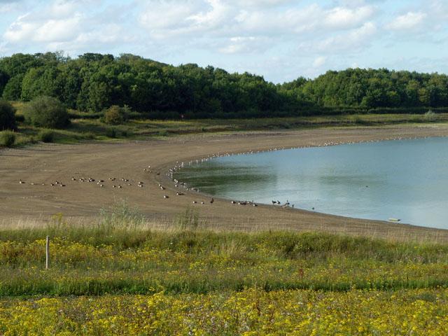 Birds on the 'beach', Arlington Reservoir