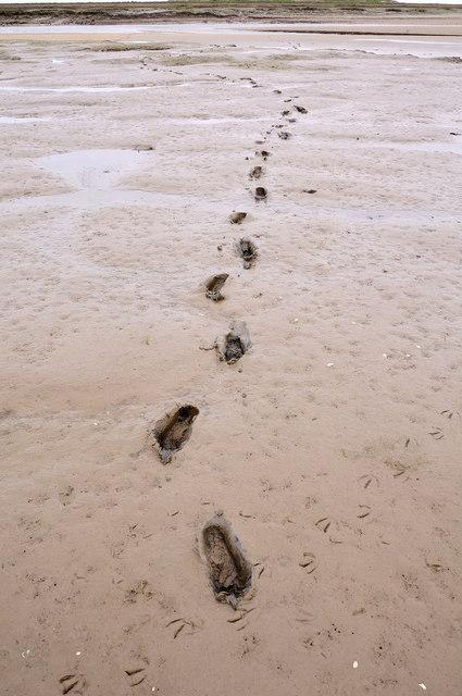 Footprints in the mud, Norton Creek, near Burnham Deepdale
