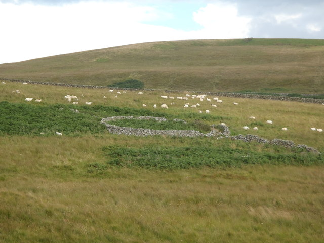 Old sheep pen north of Duchrae